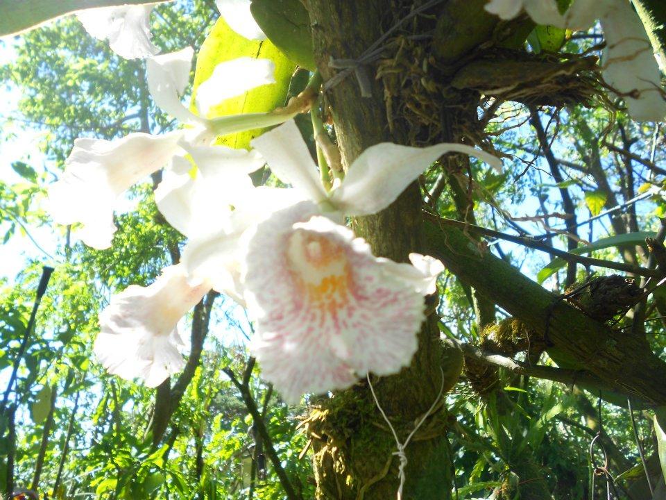 costa-rica-monteverde-orchids