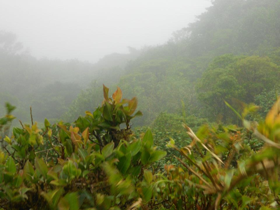 monteverde-cloud-reserve