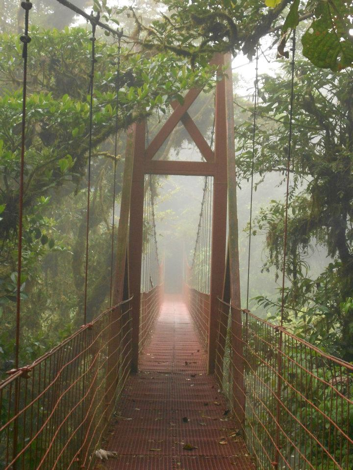 monteverde-costa-rica-cloud-forest