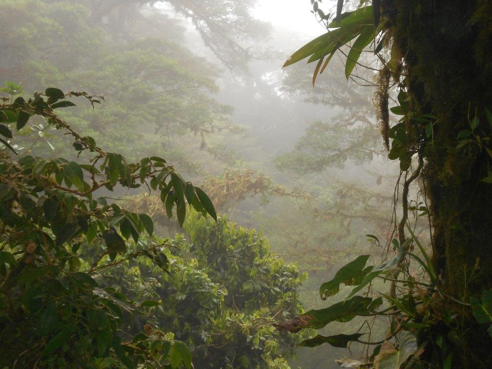 costa-rica-cloud-forest